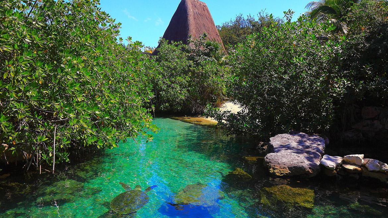 The Best Photo Safari Experience at Riviera Maya Mexico
